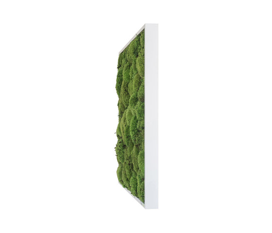 moss picture | pole moss picture 55x55cm by styleGREEN | Living / Green walls