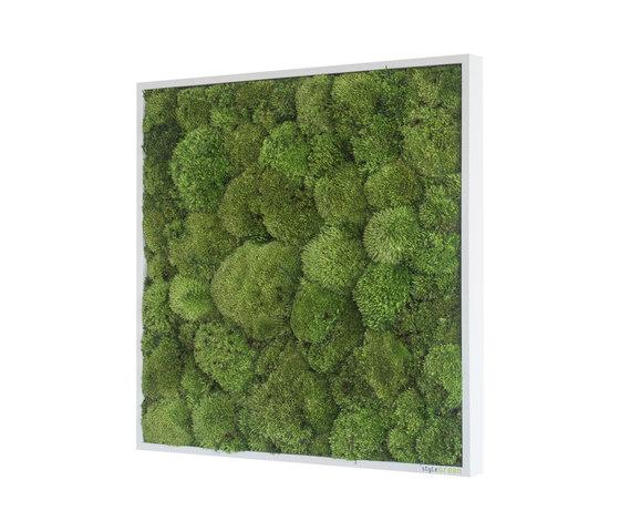moss picture | pole moss picture 55x55cm de styleGREEN | Parades verdes / jardines verticales