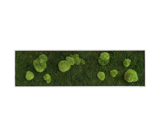 moss picture | pole and forest moss picture 140x40cm de styleGREEN | Parades verdes / jardines verticales