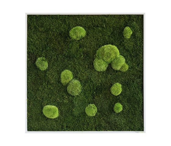 moss picture | pole and forest moss picture 80x80cm by styleGREEN | Living / Green walls
