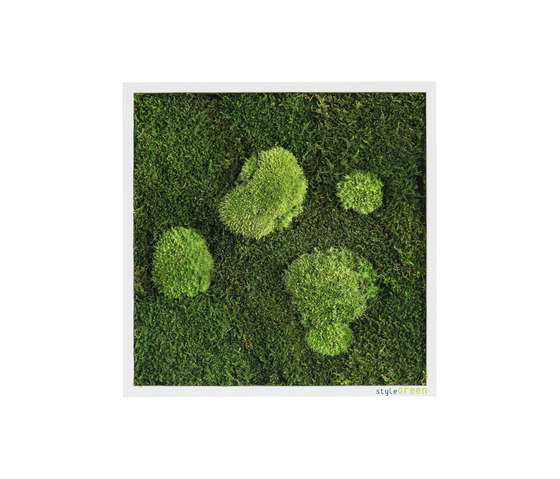 moss picture | pole and forest moss picture 35x35cm de styleGREEN | Parades verdes / jardines verticales