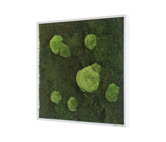 moss picture | pole and forest moss picture 55x55cm by styleGREEN | Living / Green walls