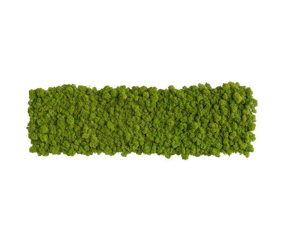 reindeer moss picture 70x20cm by styleGREEN | Sound absorbing wall art
