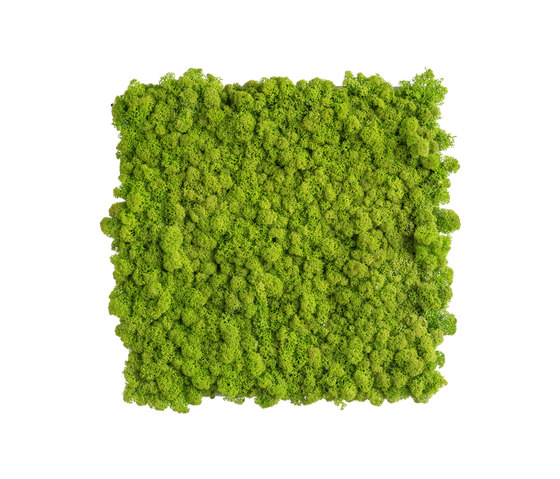 reindeer moss picture 35x35cm by styleGREEN | Living / Green walls