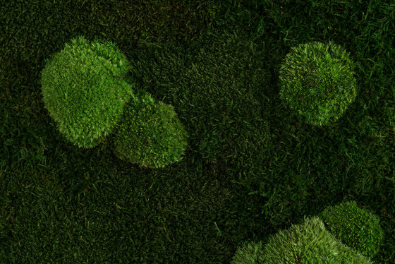 individual | greening forest and pole moss by styleGREEN | Living / Green walls