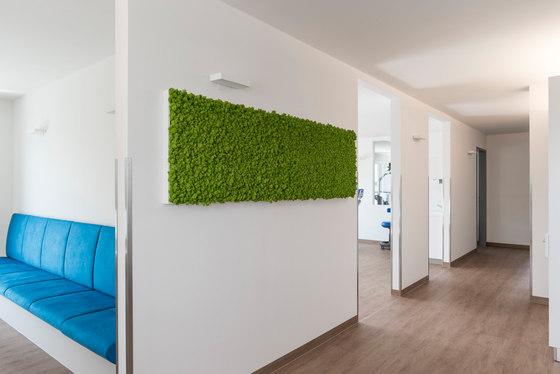 individual   greening reindeermoss by styleGREEN   Living / Green walls