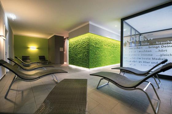Evergreen Premium Moss de Freund | Parades verdes / jardines verticales