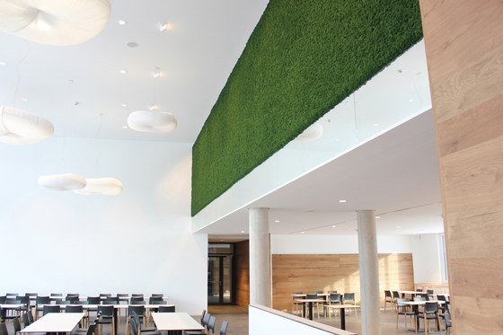 Evergreen Premium Moss by Freund | Wall panels