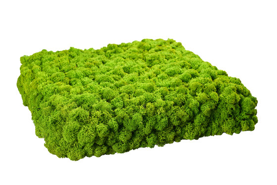 Evergreen Premium moss pictures by Freund | Sound absorbing wall art