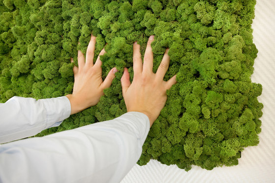 Evergreen Premium moss pictures de Freund | Cuadros de pared fonoabsorbentes