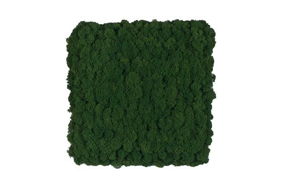 Evergreen Premium moss pictures by Freund | Wall panels