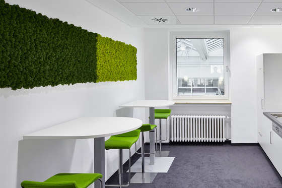Evergreen Premium moss pictures by Freund | Sound absorbing objects