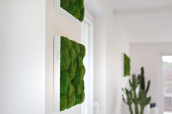 Greenhill Moss Pictures by Freund | Wall decoration