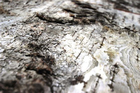 Birch bark by Freund | Wood panels
