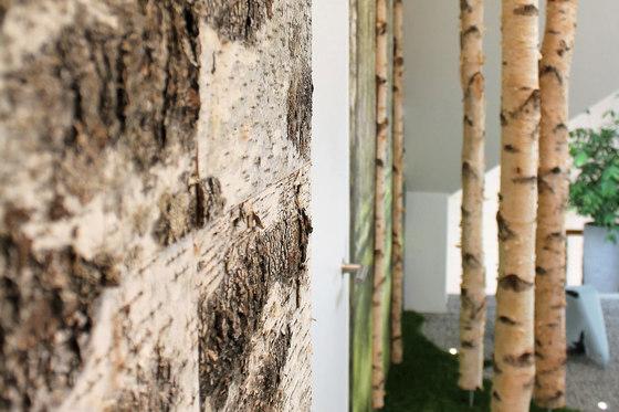 Birch bark by Freund   Wood panels