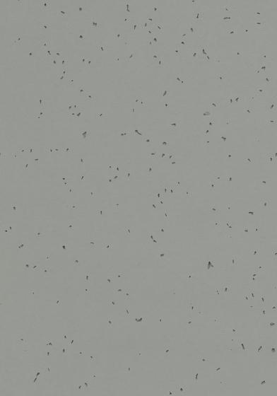 Sphera Energetic pigeon by Forbo Flooring | Synthetic tiles