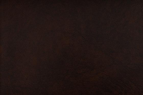 SIERRA C5 MOCCA by SPRADLING   Upholstery fabrics