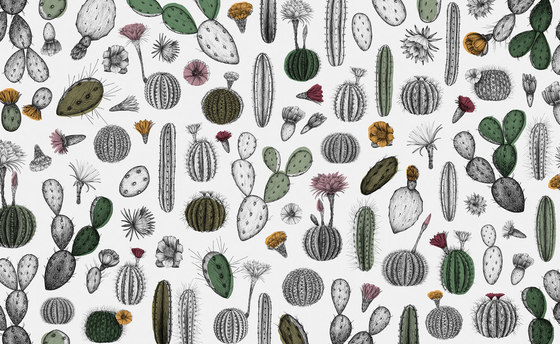 Cactofilia by WallPepper | Wall coverings / wallpapers