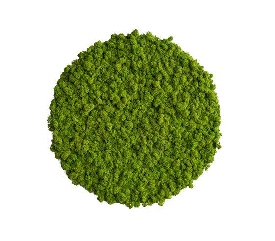 circle   reindeer moss 54cm de styleGREEN   Parades verdes / jardines verticales