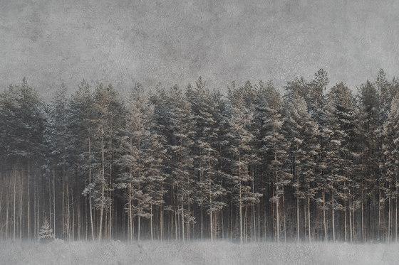 Black Forest by INSTABILELAB | Wall art / Murals