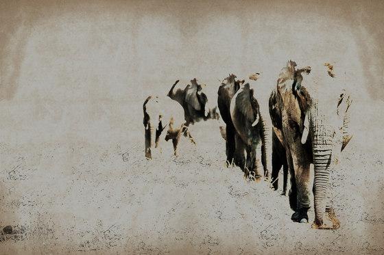 Elephant Posing de INSTABILELAB | Arte