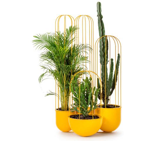 Cacti planter di nola | Vasi piante