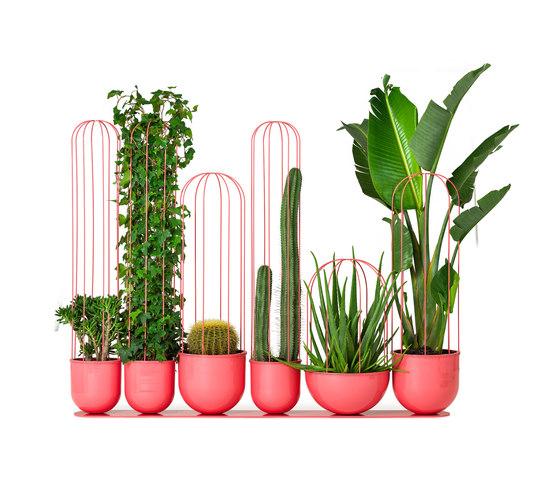Cacti planter de nola | Maceteros