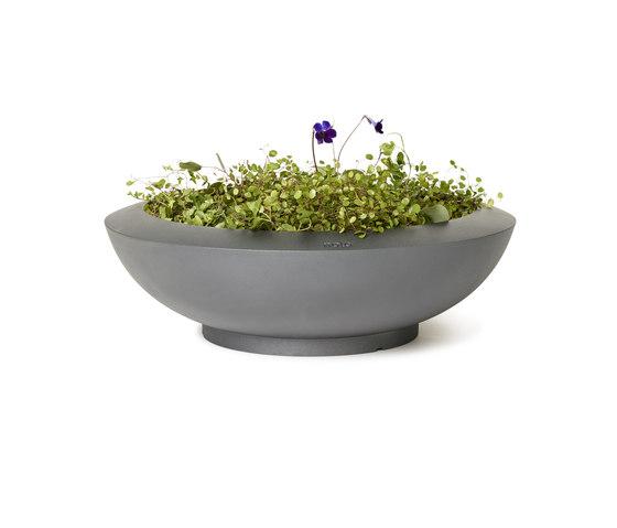 Sake planter di nola | Vasi piante