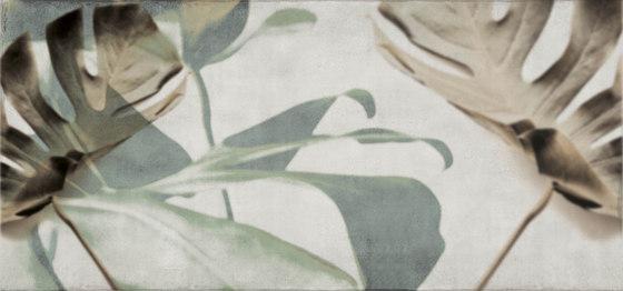 jungle | monstera by N.O.W. Edizioni | Wall art / Murals