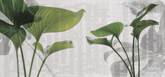 urban | leaves di N.O.W. Edizioni | Quadri / Murales