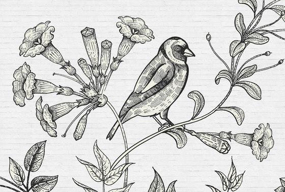 birdy 1 de Architects Paper | Revestimientos de paredes / papeles pintados