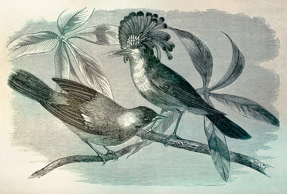 Walls By Patel| Papel Pintado Vintage Birds 1 de Architects Paper | Revestimientos de paredes / papeles pintados