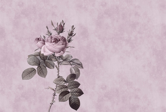 Rose 1 by Architects Paper | Wall coverings / wallpapers