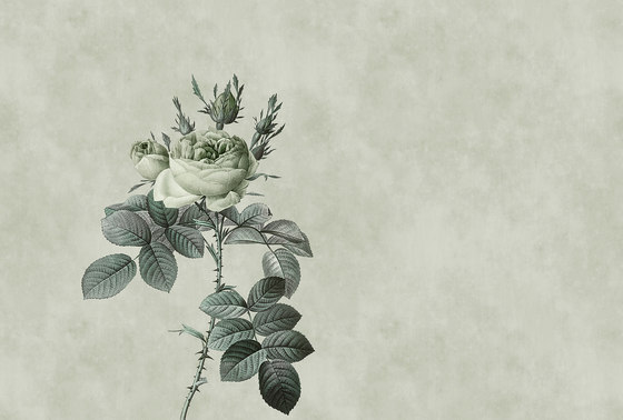 Rose 2 by Architects Paper | Wall coverings / wallpapers