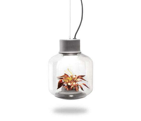 Mygdal Plantlight Regular Lush by Nui Studio | Suspended lights