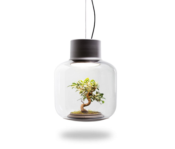 Mygdal Plantlight Large Zen by Nui Studio | Suspended lights