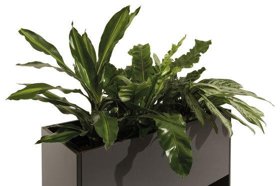 Ticino by conmoto | Plant pots