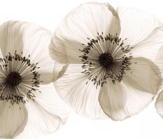 Opium carta parati tappezzeria wall dec architonic for Wall e deco rivenditori
