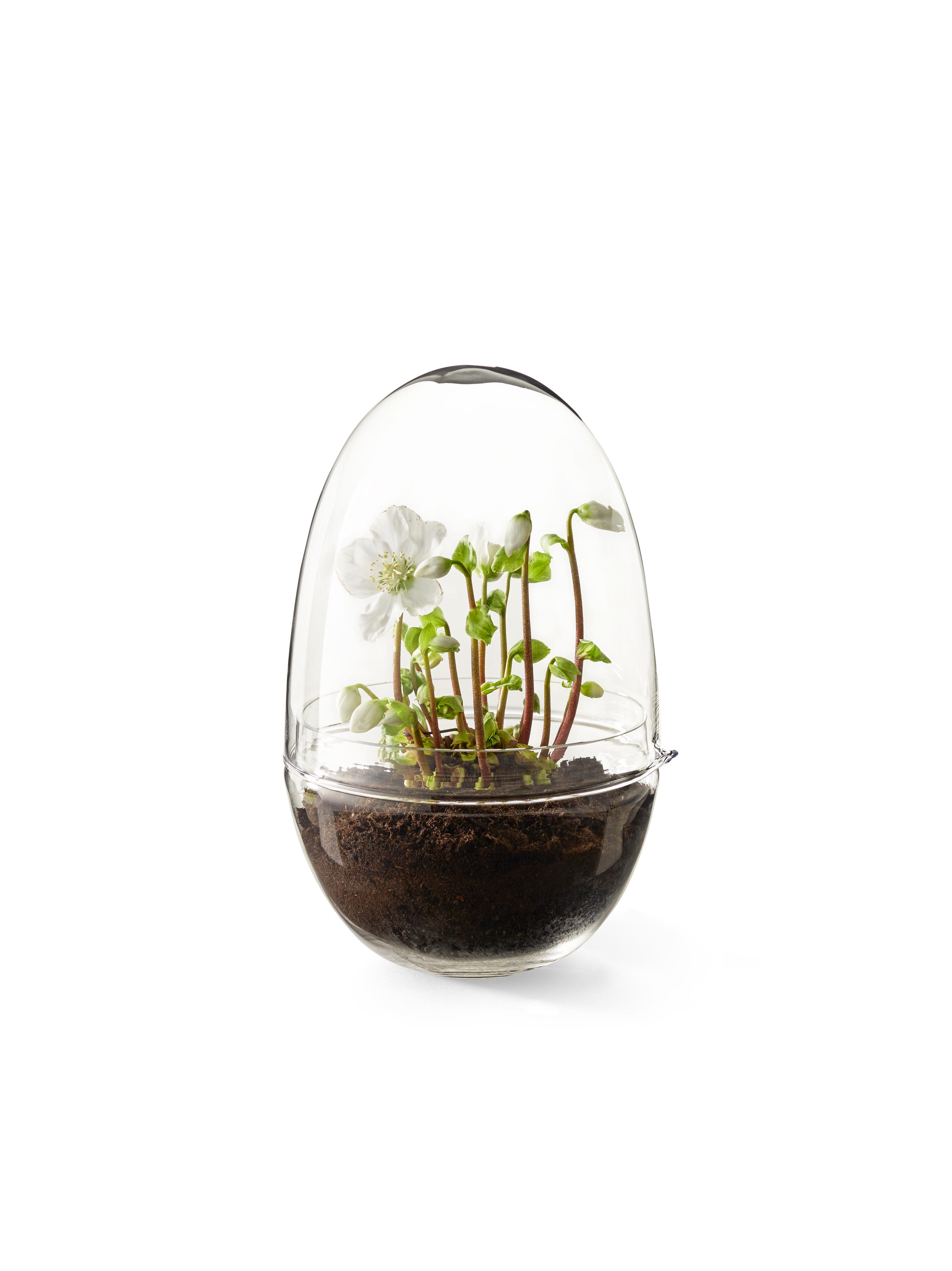 grow greenhouse x large plant pots from design house stockholm