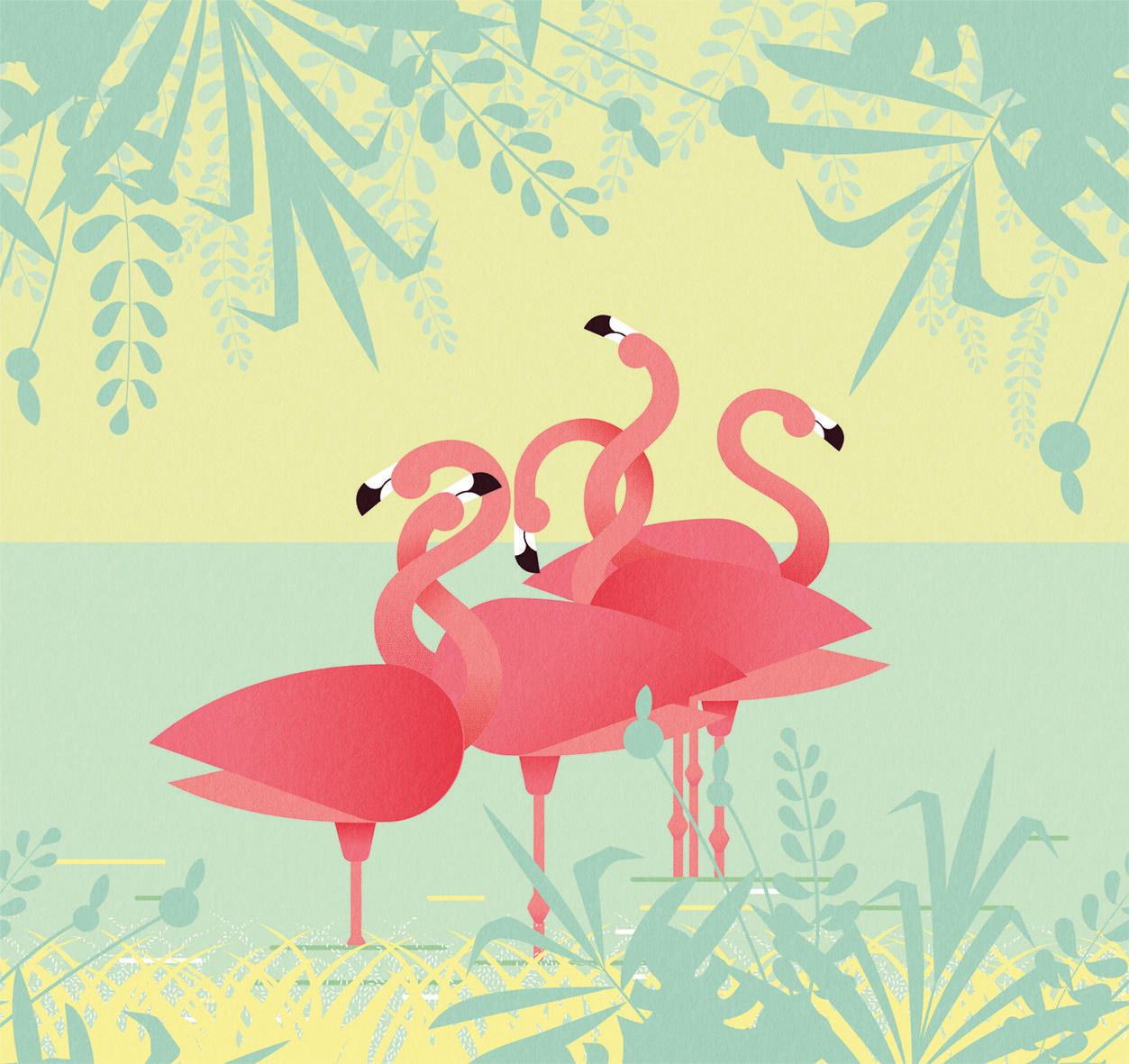 Flamingo Pink Wallpapers Wallpaper