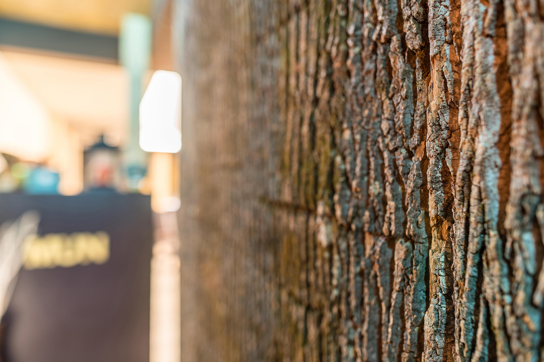 Pappelbaumrinde Holz Platten Von Freund Architonic