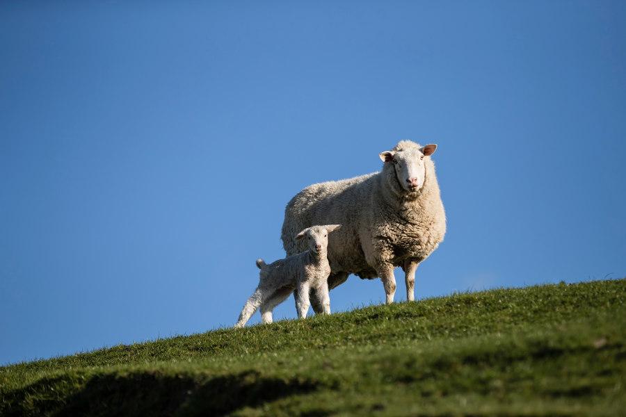 Best Wool