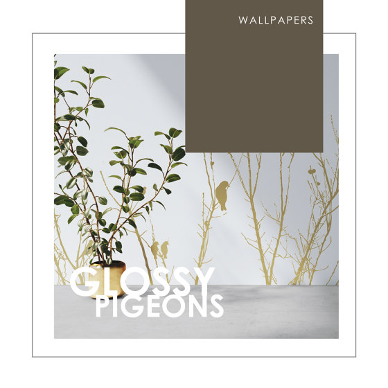 WALLPAPERS | GLOSSY PIGEONS