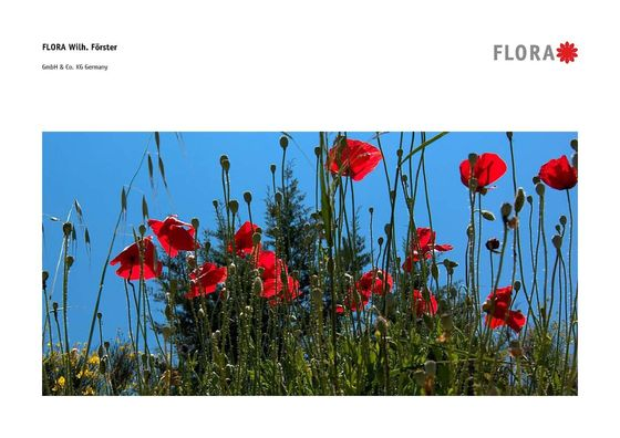 FLORA Overview 2013