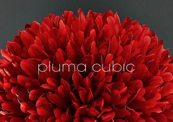 pluma cubic