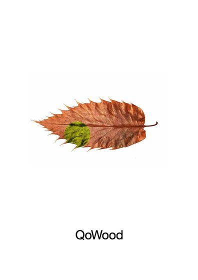 QoWood 2017