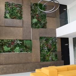 Green Walls Dense Forest