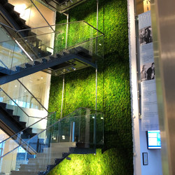 Green Walls Provence Moss