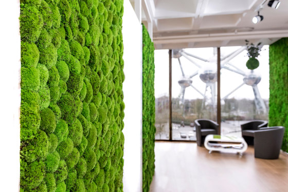 Green Wall Ball Moss di Greenmood