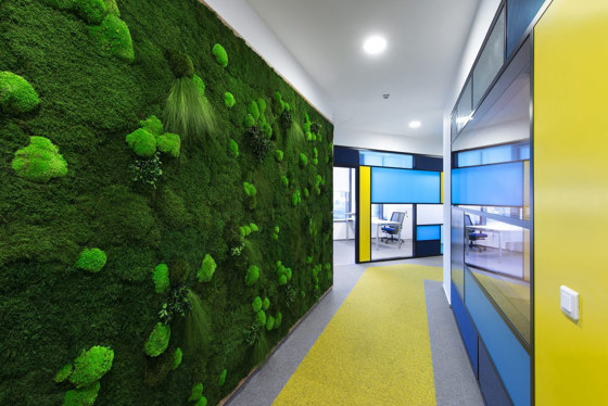 Green Walls Sparse Forest by Greenmood